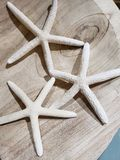 Three white star fishes sculpture on wood.  stock image
