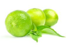 Three whole citrus limes with leaves Isolated on white.  Stock Photos
