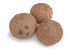 Three whole coconuts on white background. Three whole coconuts on a white background with clipping path Royalty Free Stock Images