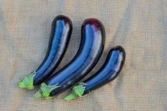 Three whole eggplants on a sacking background Stock Photography