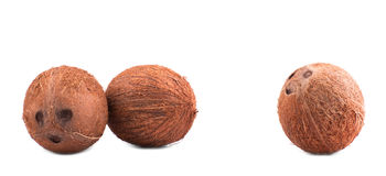 Three whole, fresh and brown coconuts, isolated on a white background. Hawaiian coconuts. Tropical and exotic coconuts. Hawaiian coconuts, isolated on a white Royalty Free Stock Photo
