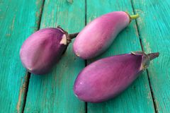 Three whole fresh organic violet aubergines on old turquoise tab Stock Photos