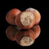 Three whole hazelnuts Stock Photography