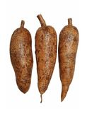 Three whole  manioc Stock Images