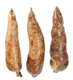 Three whole manioc Royalty Free Stock Photography