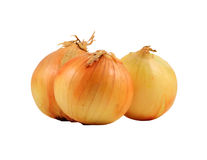 Three whole onions white background. Three whole onions on a white background Royalty Free Stock Image