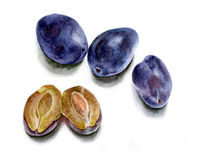 Three whole plum and one cut, watercolor Stock Image