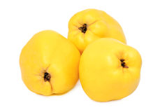 Three whole quinces (isolated) Stock Photo