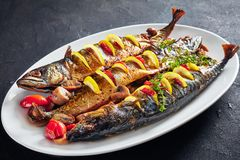 Three whole roasted mackerel on an oval dish. Close-up of three whole broiled mackerels served with lemon, tomatoes, mushrooms, spices and herbs on a white oval stock photography