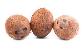 Three whole tropical brown coconuts  on a white background. Close-up of tasty and bright brown coconuts. Three whole, big, fresh, organic tropical fruits of Royalty Free Stock Photo