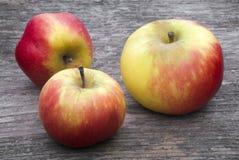 Three wild apples Royalty Free Stock Photography