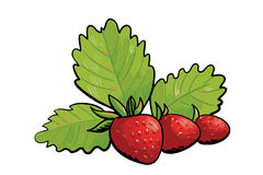 Three wild strawberries Stock Image
