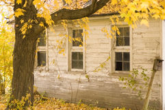 Three windows in Fall. Side of a garage with three windows, framed by a tree in fall foliage Royalty Free Stock Images