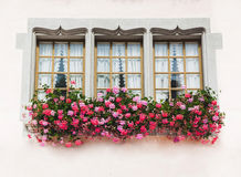 Three windows in old house with pink flowers Royalty Free Stock Image