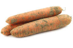 Three winter carrots Royalty Free Stock Photography