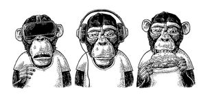 Three wise monkeys. Not see, not hear, not speak. Vintage engraving. Three wise monkeys in headphones, virtual reality headset,and burger. Not see, not hear, not Royalty Free Stock Photography