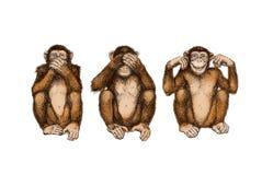 Three wise monkeys (see, hear, speak no evil). Illustration: Three wise monkeys (see, hear, speak no evil Stock Photos