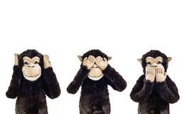 Three wise monkeys. Royalty Free Stock Image