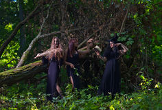 Three witches in forest Stock Photography