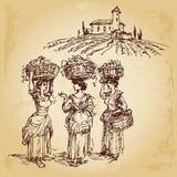 Three women harvesting grape. In the vineyard, vector hand drawn illustration Royalty Free Stock Photo