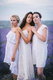Three women posing in a lavender field Royalty Free Stock Image