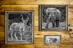 Three wooden frames with wild animals. Royalty Free Stock Photos