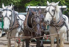 Three work horses on Mackinac Island royalty free stock photos