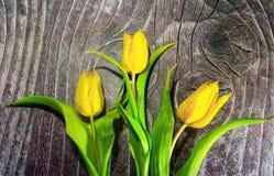 Three yallow tulips on wood. Background royalty free stock image