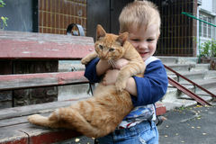 Three-year boy and red cat Stock Image