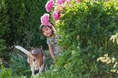 Three year old girl playing with cute dog in the garden. Royalty Free Stock Images