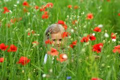 Three year old toddler girl hiding in the summer field of blooming poppies stock photography
