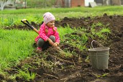 Three year old toddler girl in pink trying to dig the vegetable garden with a spade stock photography