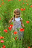 Three year old toddler girl in the summer field of blooming poppies royalty free stock photography