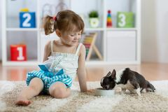 Three years old child sitting on carpet and feeding his little dog Stock Image