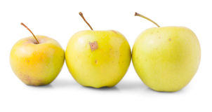 Three yellow apples Royalty Free Stock Image