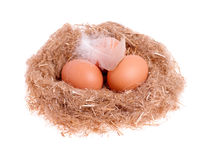 Three yellow balls with a feather in the nest Royalty Free Stock Photography