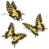 Three yellow butterfly Royalty Free Stock Image