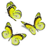 Three yellow butterfly. Isolated on white background stock photos