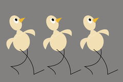 Three yellow chicken. Gray background. Flat design. Stock Photo