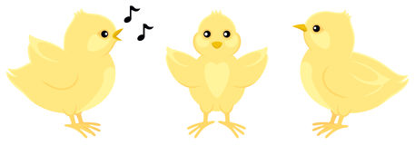 Three Yellow Chicks. A chick in three different poses. One is singing with musical notes Stock Image