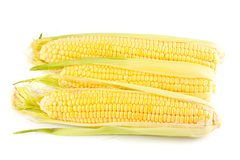 Three yellow corn on the cob Stock Photo