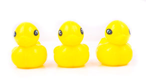 Three Yellow duck Attack  on white background Royalty Free Stock Photos
