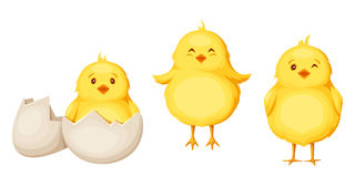 Three yellow Easter chickens. Vector illustration. Set of three cute yellow Easter chickens isolated on a white background vector illustration