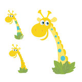 Three yellow giraffe heads isolated on white Stock Images