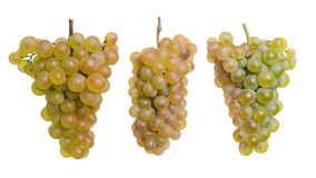 Three yellow grapes isolated on a white stock images