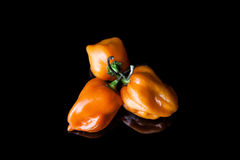 Three yellow habanero peppers Royalty Free Stock Photography