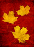 Three yellow leaves Royalty Free Stock Photography