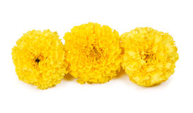Three yellow marigolds Royalty Free Stock Images