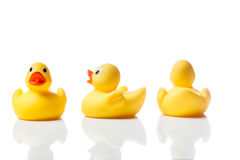 Three yellow rubber ducks on white with reflection Stock Photo
