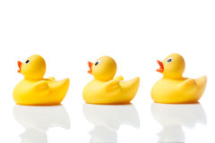 Three yellow rubber ducks on white with reflection Royalty Free Stock Photography